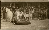 "Bull dogged at ""The Stampede"" Calgary, Alta. 1912"